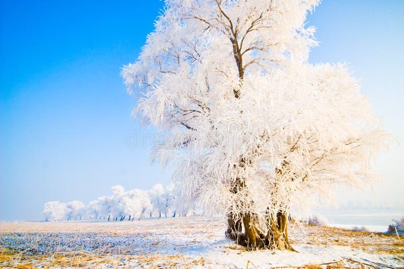 frostad liggandetreesvinter royaltyfri fotografi