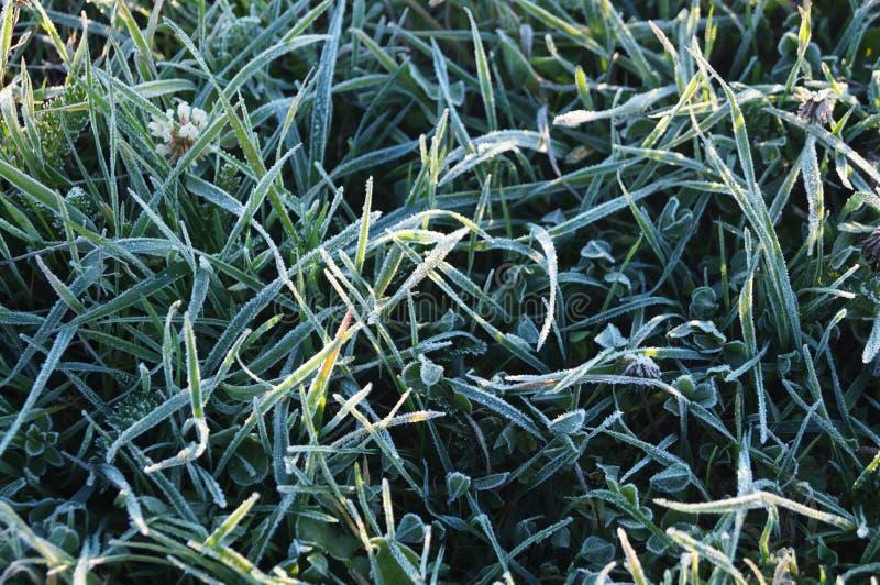 Frostat gräs royaltyfri foto