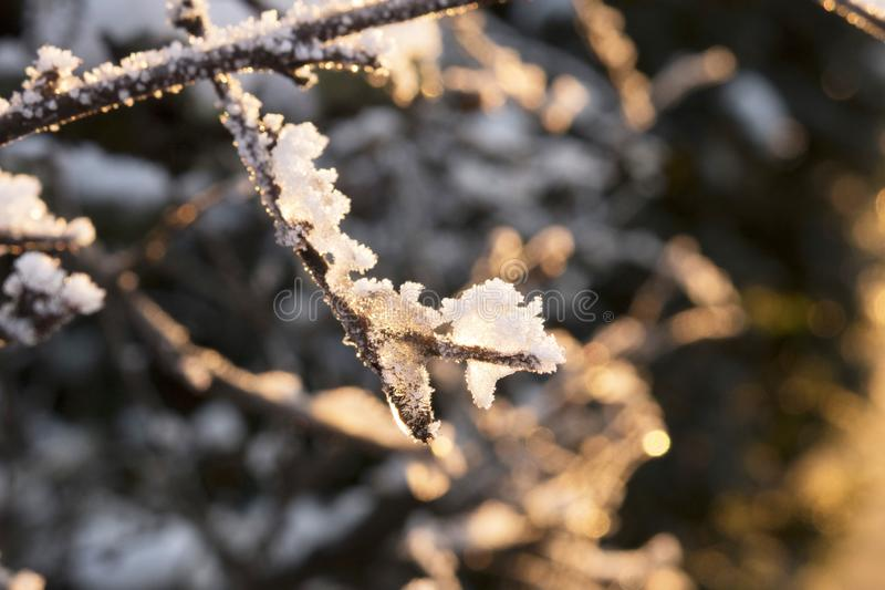 Frosted branch glows in the sun stock image