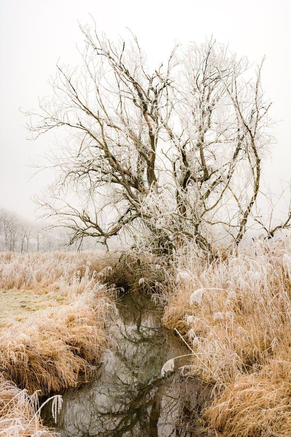 Frosted drzewa przy rzecznym Paar fotografia stock