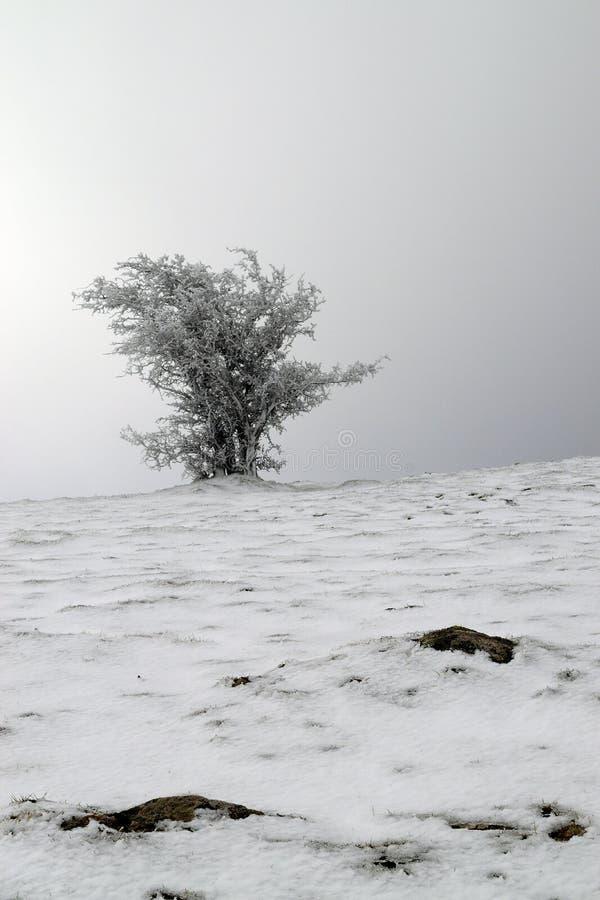 Frosted drzewo kształtował wiatrem z kamieniami w przedpolu obrazy stock
