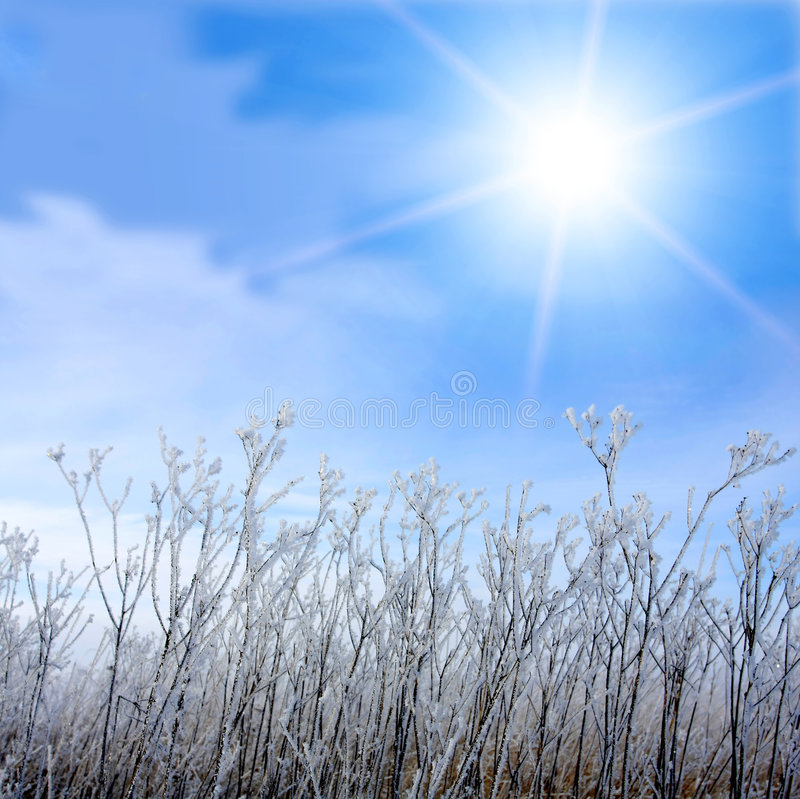 Download Frosted Grass And Winter Sun Stock Image - Image of cold, background: 8004569