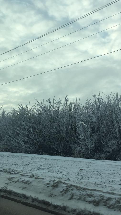 Frosted marznący drzewa zdjęcia stock
