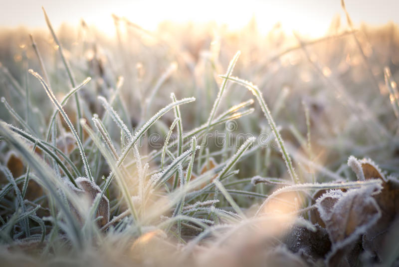 Frosted meadow. Frozen grass in the winter morning sun royalty free stock images