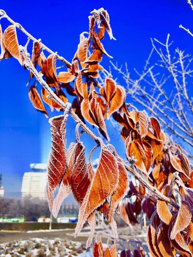 Frosted roślina zdjęcie stock