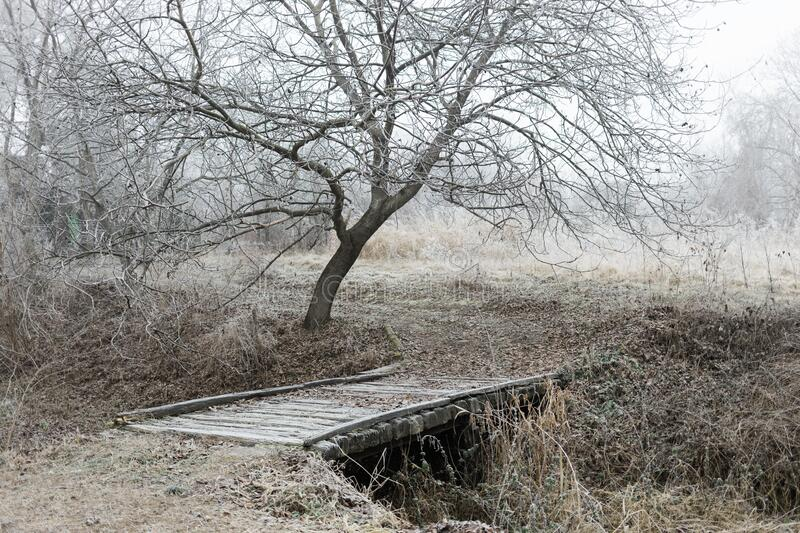 Frosted rustic bridge in the forest in winter royalty free stock image