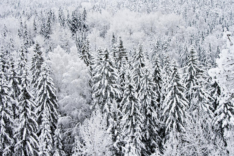 Download Frosted and snowy trees stock image. Image of snowy, winter - 22470465