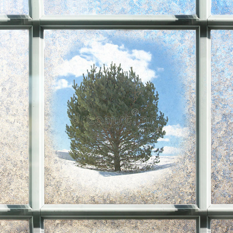 Frosted Square Winter Window Glass with Pine Tree Outside. Square background of a window with white square panes in the winter, frosted over with ice, with hints royalty free stock photography