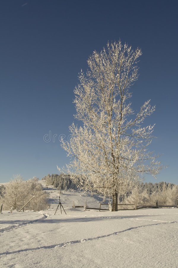 Download Frosted Tree Stock Photo - Image: 7241660