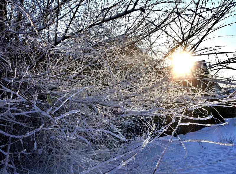 Frosted tree branches against the sun. Southern Urals. Russia. royalty free stock images