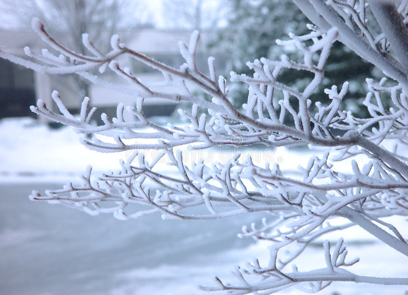 Download Frosted tree brunch stock image. Image of natural, background - 330467