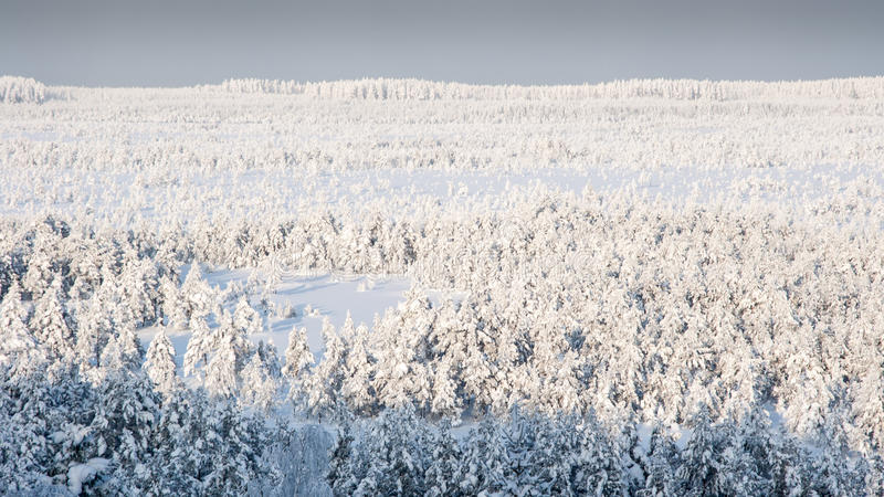 Frostenmoeras royalty-vrije stock afbeelding