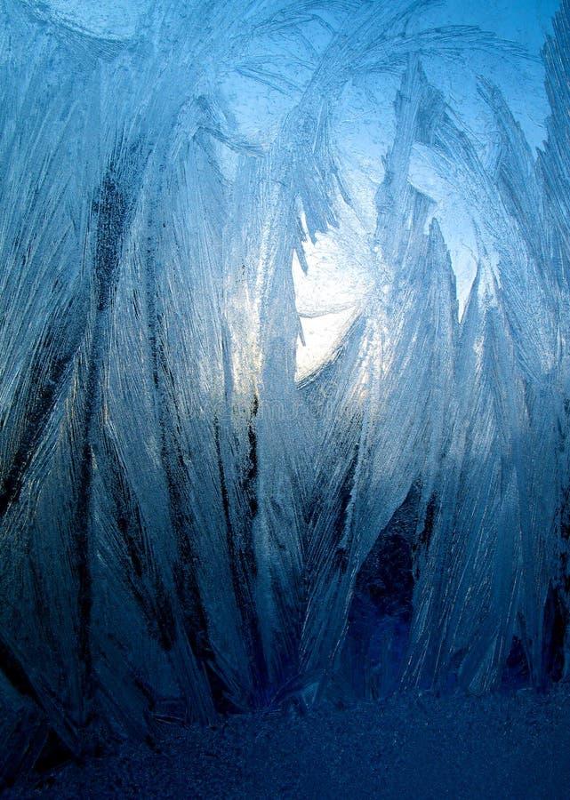 Frostig blå modell royaltyfri bild