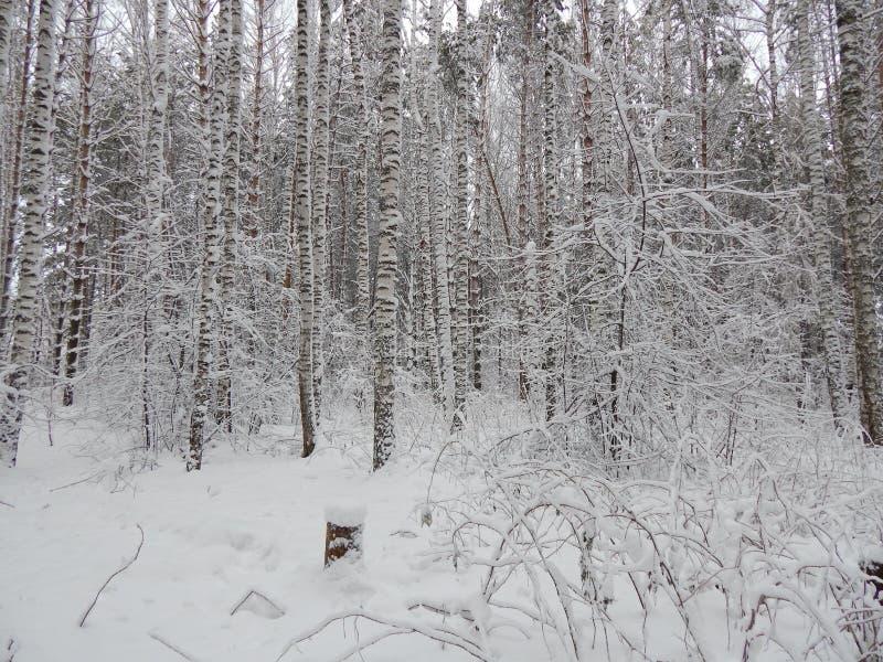 Frostig dag i Sibirien arkivbilder