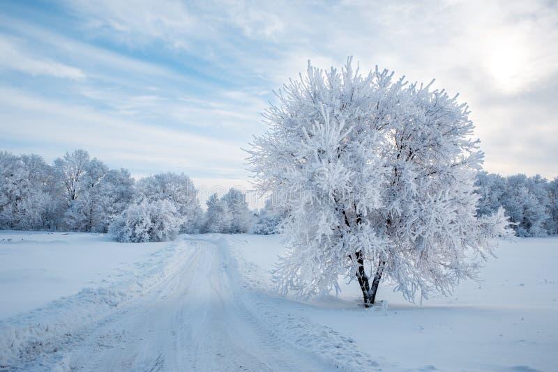 Frostig dag i vinter i Ryssland, träd i rimfrost arkivbild