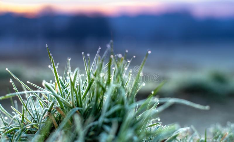 Frostig gräsdetalj med morgondagg royaltyfria bilder
