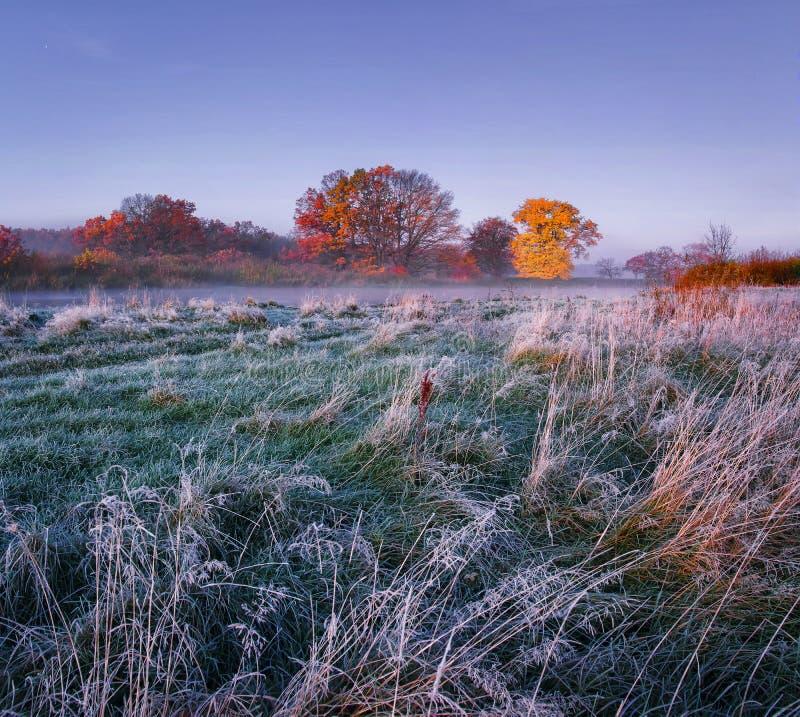Frostig höst för landskap Morgonlandskap av ängen med rimfrost och kulöra träd på horisont Frostig morgon för nedgång royaltyfri fotografi