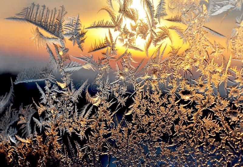 frostig modellfönstervinter royaltyfri foto