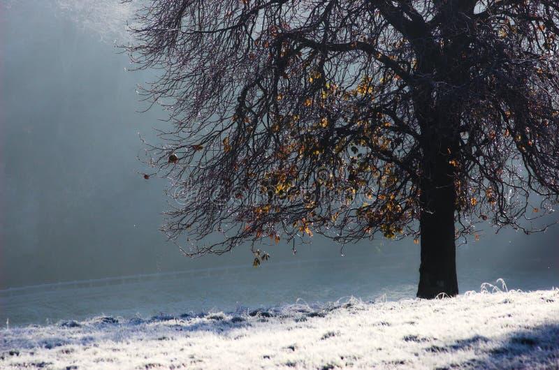 frostig morgon arkivbilder