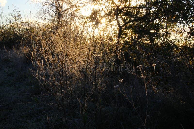 Frostig morgon tidigt arkivbild
