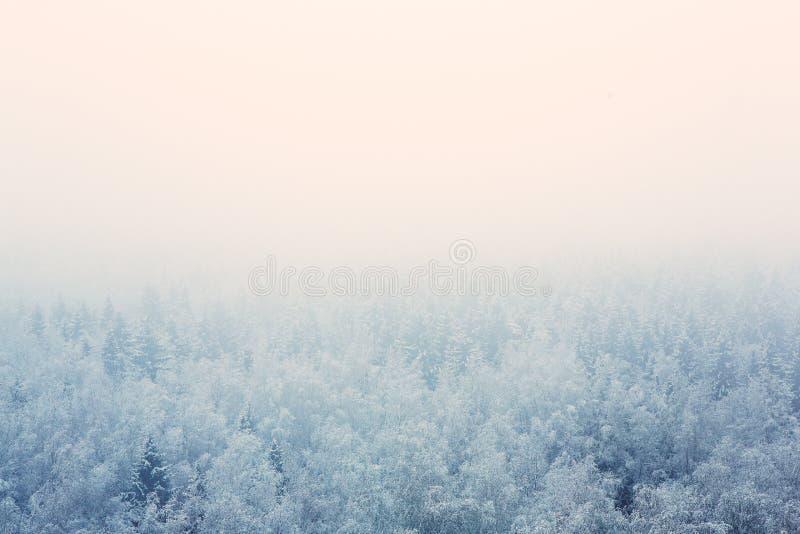 Frostig morgonmist över skogen arkivfoto