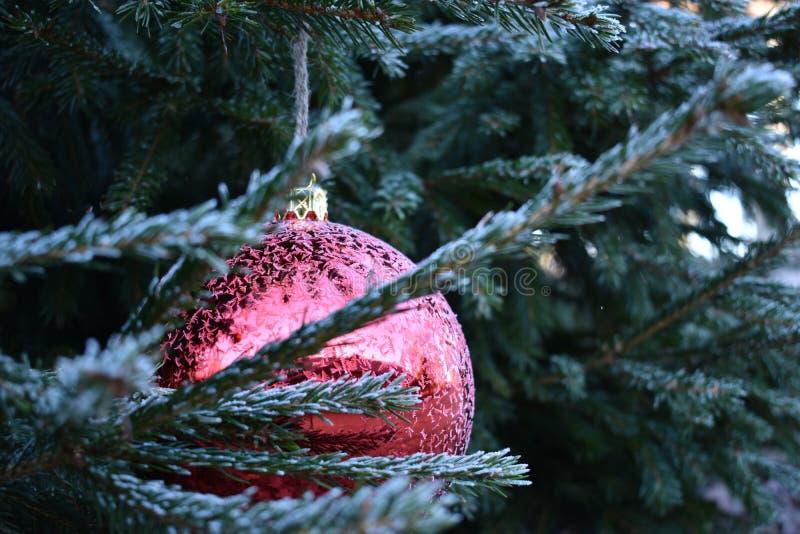 Frostig röd julstruntsak på träd royaltyfri foto