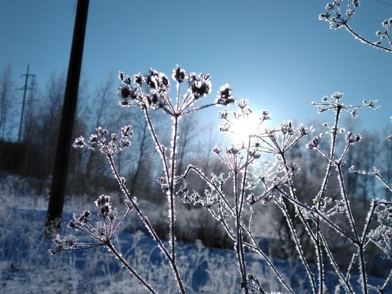 Frostig solig dag arkivbild