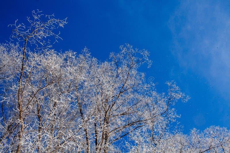 Frostig vinterdag arkivfoton