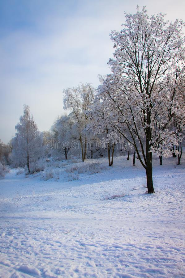 Frostig vinterdag i parkera royaltyfri fotografi