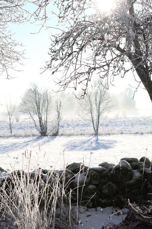 Frostig vintermorgon trädkonturer royaltyfria foton