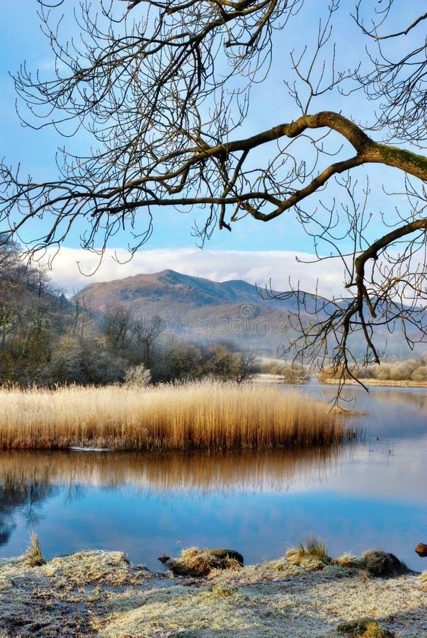 frostiga gräsvasser fotografering för bildbyråer