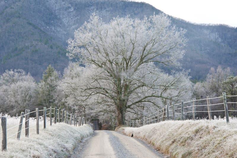 frostiga morgonberg fotografering för bildbyråer
