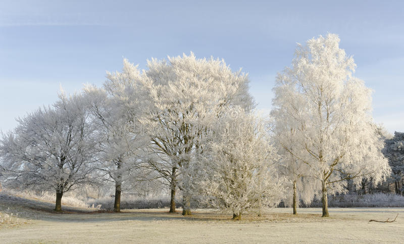 Frostiga Trees på Stanborough royaltyfri bild
