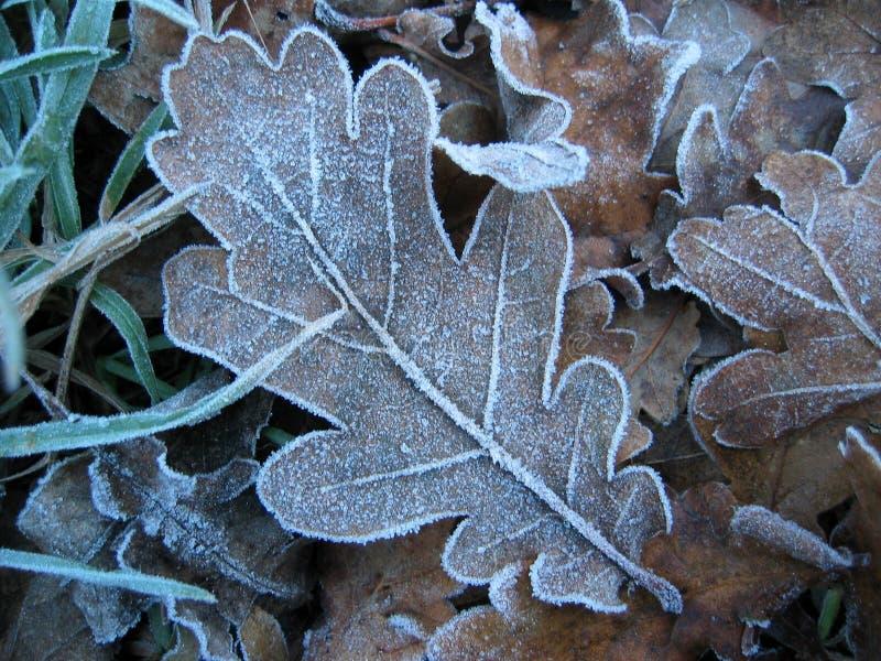 Frostigt Arkivfoto