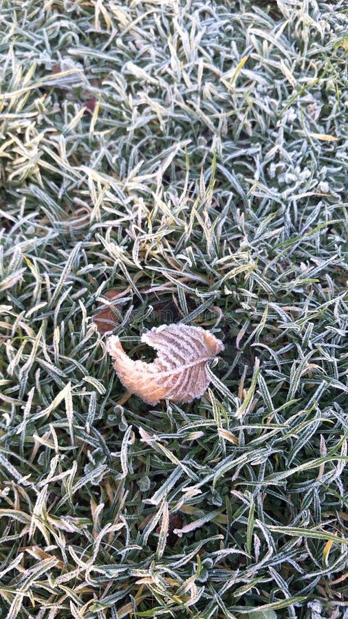 frostigt gräs royaltyfria foton