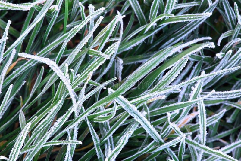 frostigt gräs arkivbilder