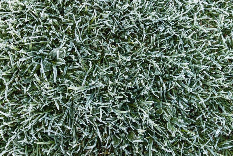 frostigt gräs royaltyfri fotografi