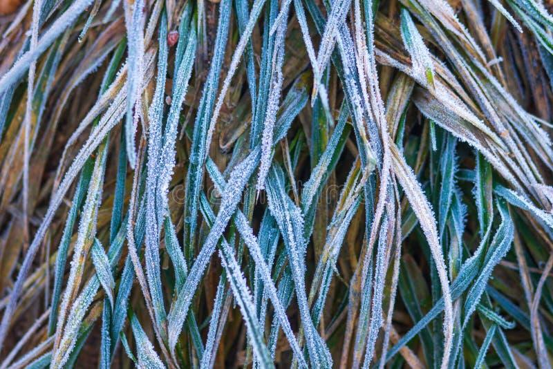 frostigt gr?s HöstfrostNovember väder Frost p? v?xter fotografering för bildbyråer