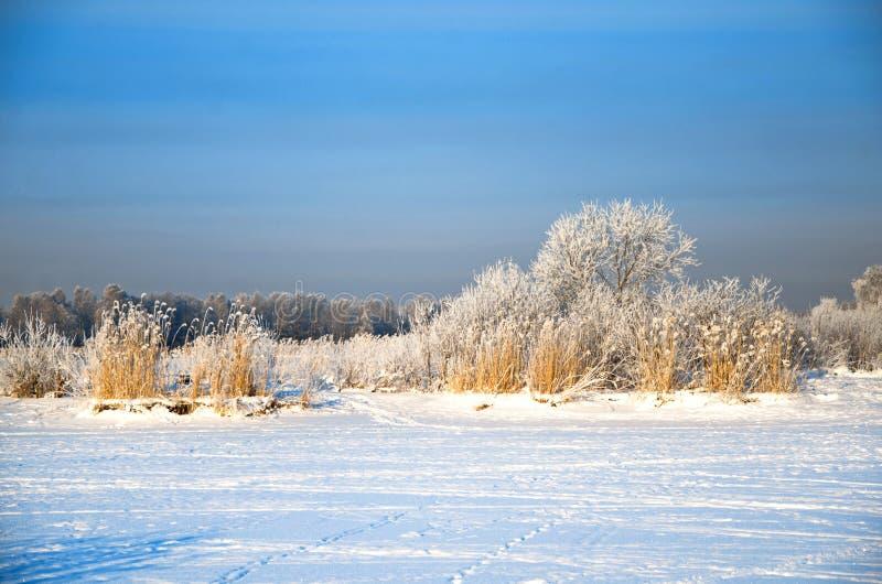 Frostigt landskap för vinter på bakgrunden av klar himmel royaltyfri bild