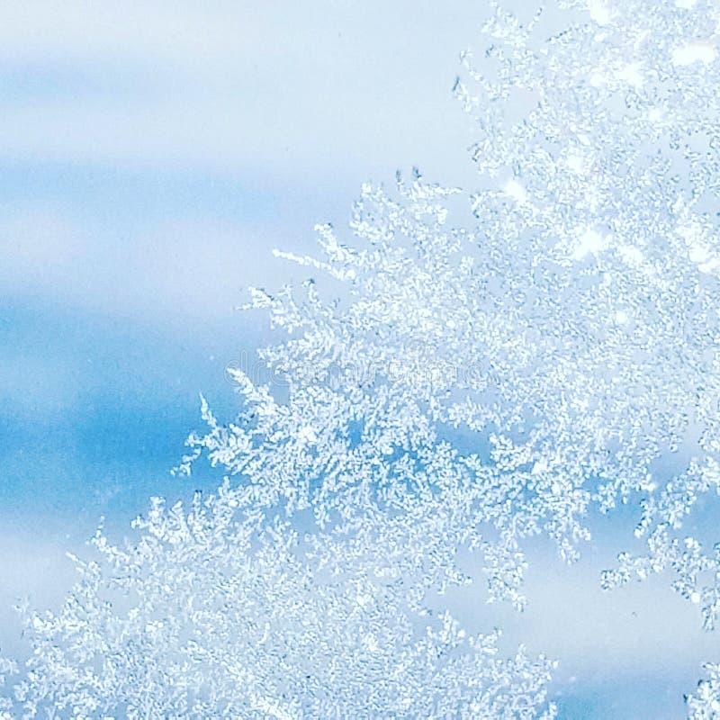 Frostigt plant fönster royaltyfria bilder