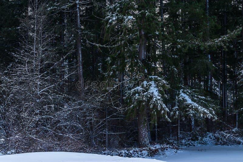 Frostigt sörja trädet i parkerar med tungt snöfall arkivbild