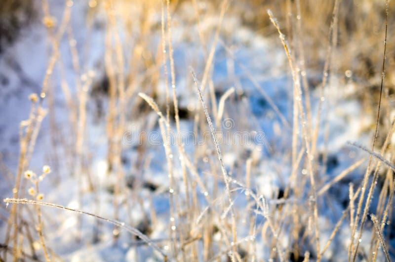 Frostigt snölandskap på den soliga dagen royaltyfria foton