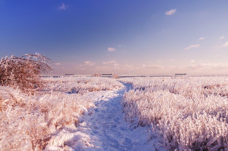 Frostigt soligt landskap arkivbild