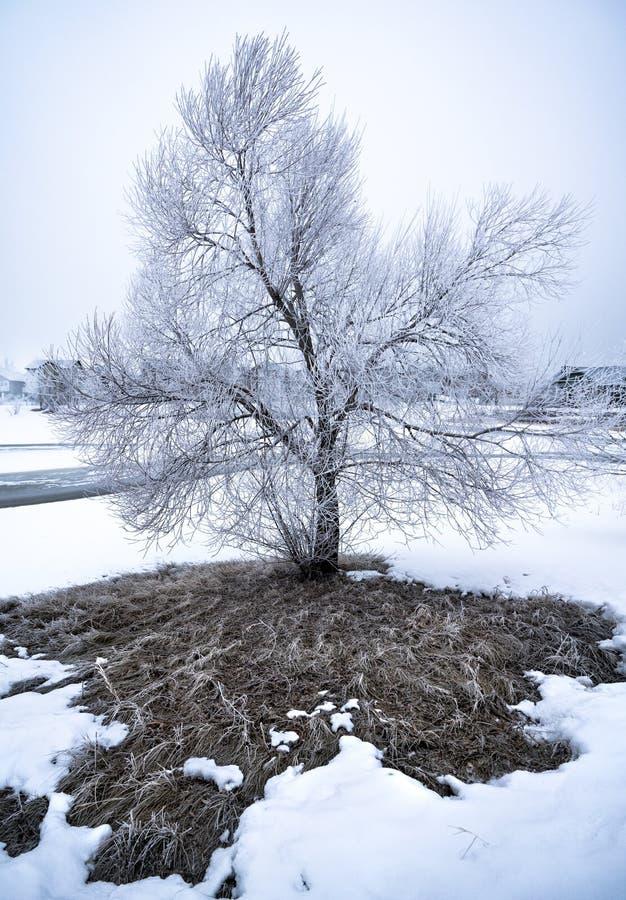 Frostigt träd i vinterlandskap fotografering för bildbyråer