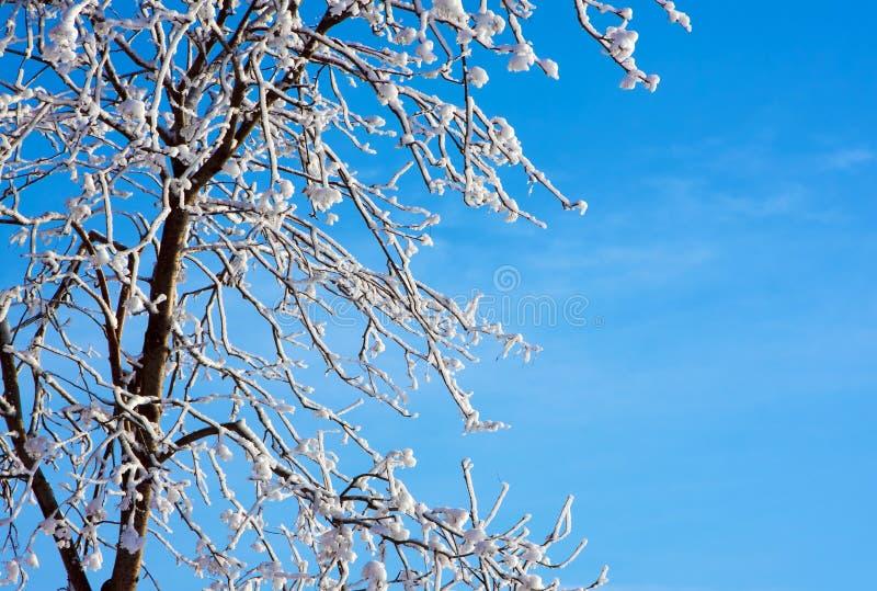 Frostigt träd och blå himmel royaltyfria foton