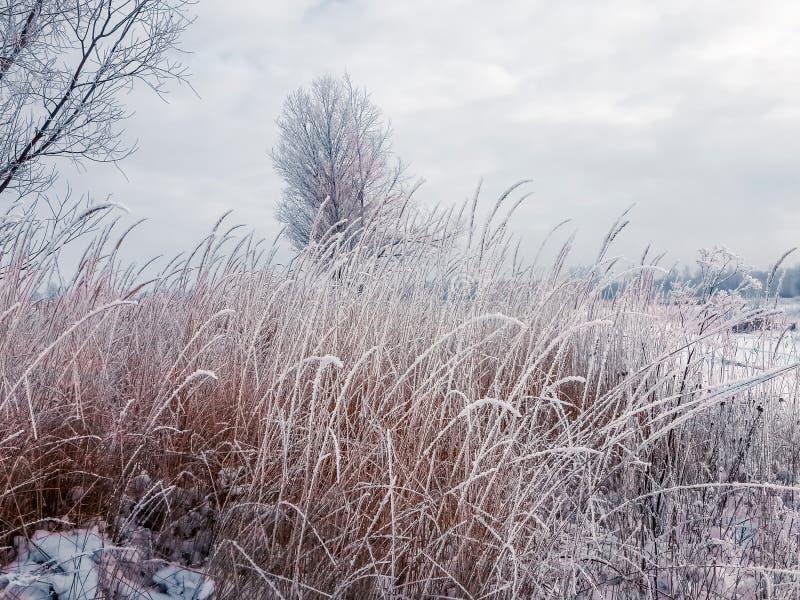 Frostigt vinterbygdlandskap som färgas i blåa signaler för silver med ljust rödbrun bruna örter i förgrunden royaltyfri foto
