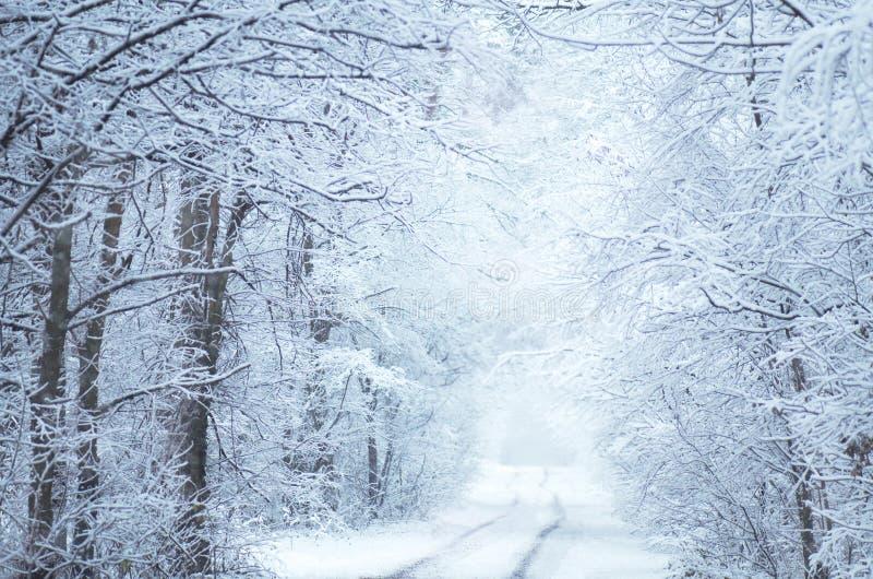 Frostigt vinterlandskap i snöig skog arkivbilder