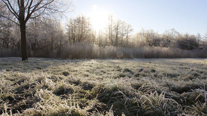 Frostiness im Winter lizenzfreies stockbild