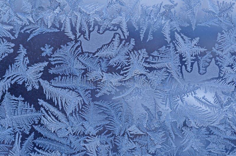 frostmodell på fönster royaltyfri bild