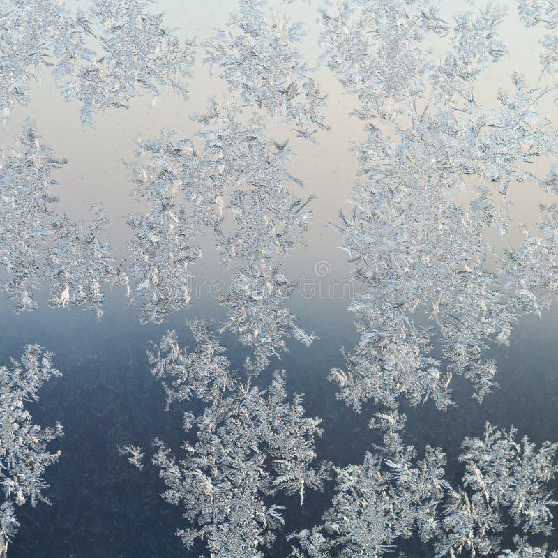 Frostmodeller på fönsterruta på vintergryning arkivbild